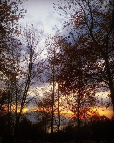 EyeEm Gallery EyeEm Nature Lover First Eyeem Photo Skylovers Nature_collection Serenity Nature Photography Eyeemphotography Autumn Autumn Leaves Yellowsunset Treeandsun Serenity Nature_collection Sky And Clouds Autumn🍁🍁🍁