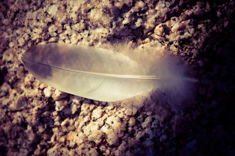 Feather Beauty