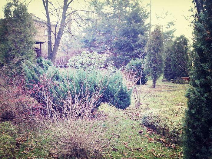 Tree_collection  Garden Creepy House Winter