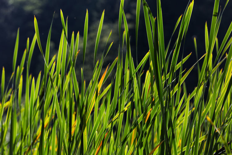 Close-up of fresh green plants in water