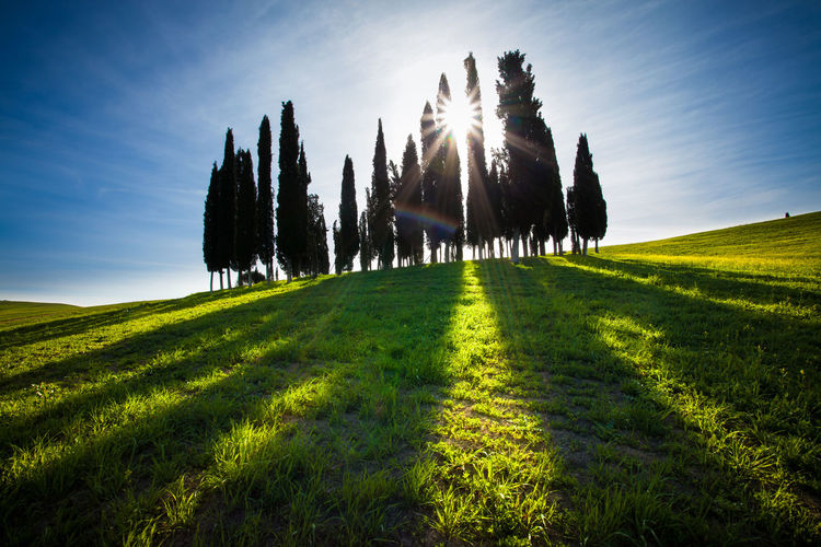 Val d'Orcia, Tuscany, Italy Italia Toscana Tuscany Beauty In Nature Day Environment Field Grass Green Color Italy Land Landscape Lens Flare Nature No People Outdoors Plant Scenics - Nature Siena Sky Sun Sunbeam Sunlight Tranquil Scene Tranquility Tree Val D'orcia