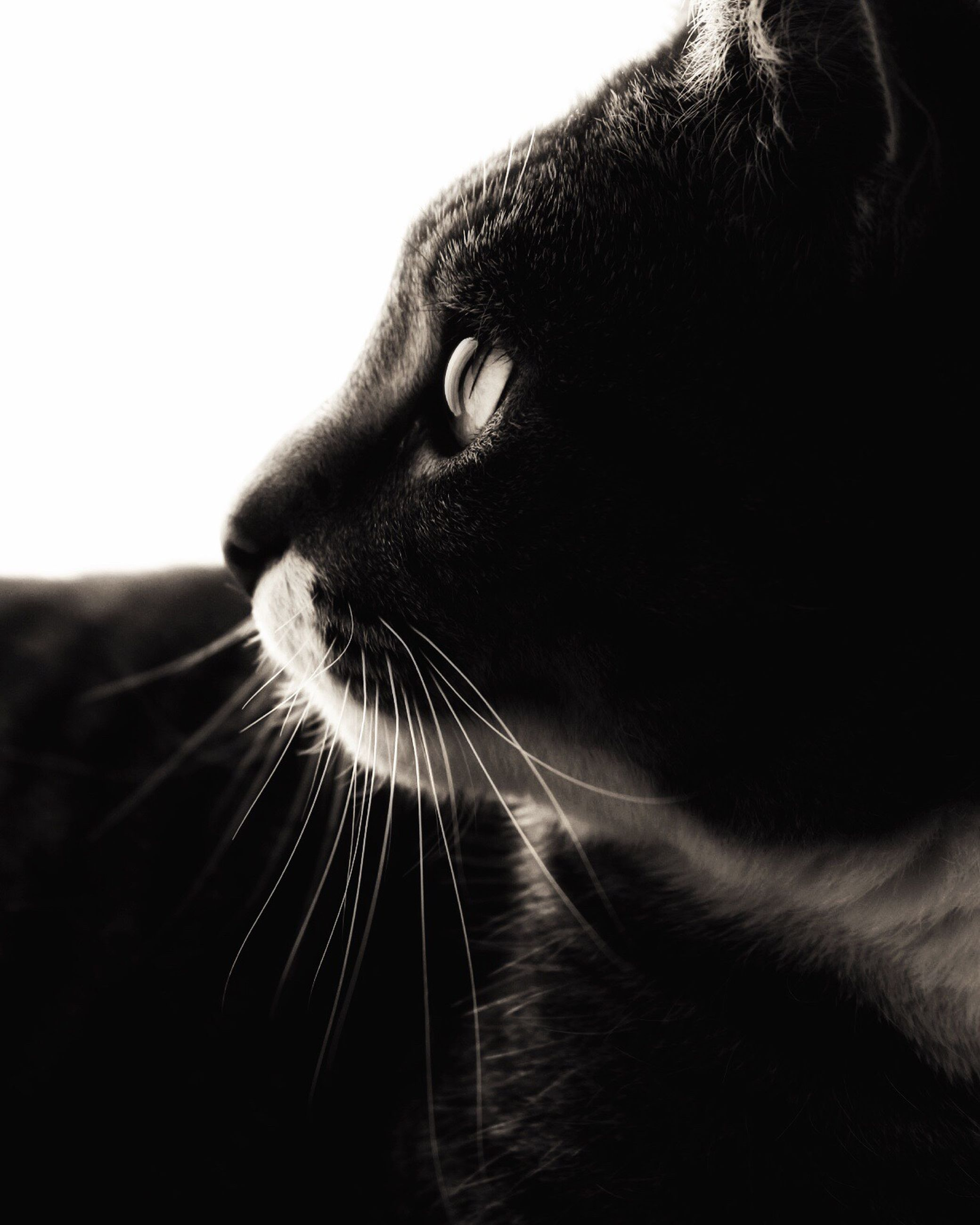 domestic cat, one animal, animal themes, domestic animals, feline, close-up, pets, whisker, mammal, cat, animal head, no people, indoors, day, nature