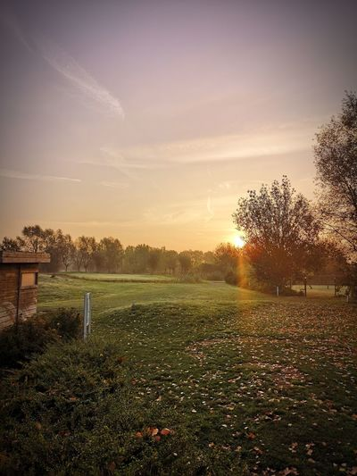 A lovely day on my job... Huawei P20 Pro Photography Golf Course Photography Sunset Tree Field Sky Grass