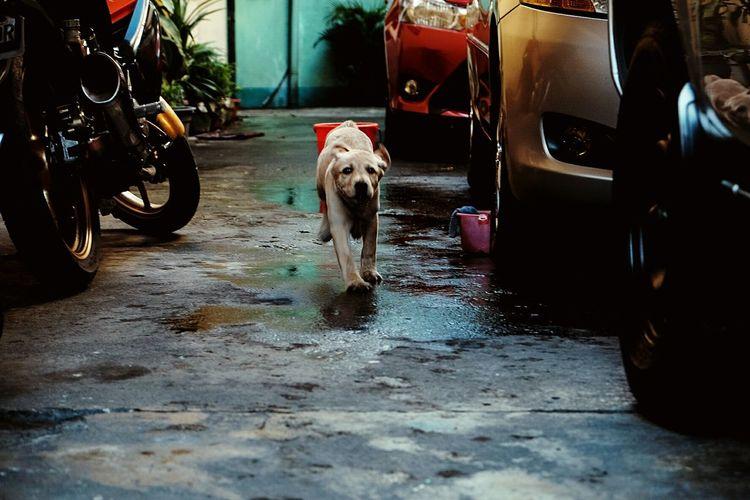 Dog Pets Domestic Animals One Animal Transportation Animal Themes Mode Of Transport Low Section Land Vehicle Outdoors Mammal Day No People Labrador LabradorLove Animal Body Part Dogstagram Doglover Dogs Of EyeEm Dog❤ Animal