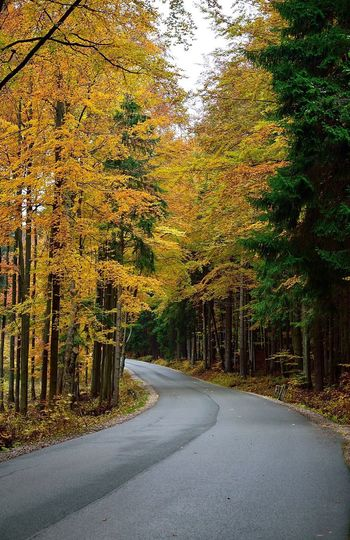 Forth goes the Road. Tree Autumn Forest Change Nature WoodLand Beauty In Nature Tranquility Tranquil Scene The Way Forward Scenics Road No People Outdoors Non-urban Scene Day Growth Leaf Branch Road Traveling Europe Colorful