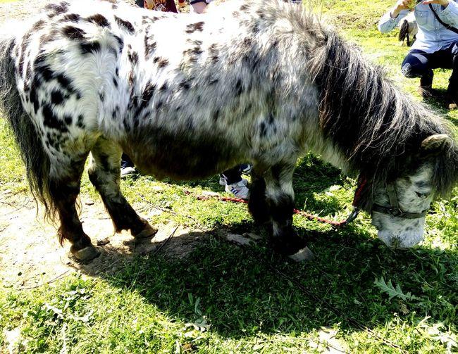 Turkey Izmir Animals Animal Horse Or Pony Cute