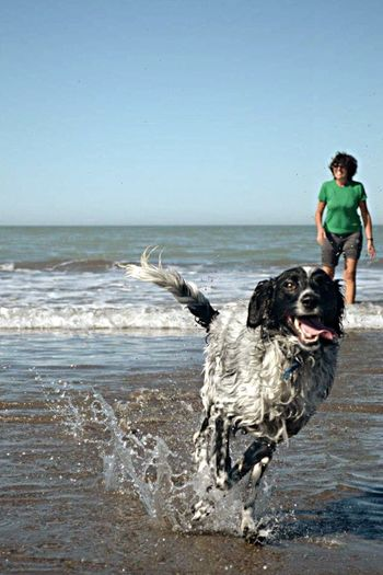 Adventure Buddies EyeEm Nature Lover EyeEm 2016 Enjoying The Sun Pets EyeEM Beach Photography Eyeem Argentina EyeEm Summer Dog Audrey
