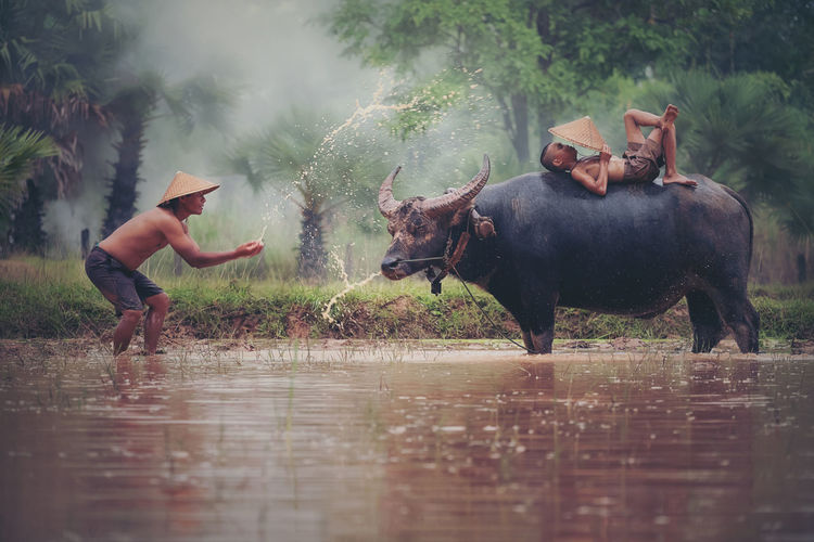 Portrait of Asian boy enjoying playing the with buffalo. Farmer dipping water and throwing to bath buffalo riding in rice farm in rural local Thailand Farm Farmer Life Rice Animal Wildlife Botany Buffalo Day Domestic Domestic Animals Group Of Animals Lake Livestock Mammal Men Nature Outdoors People Pets Plant Real People Sitll Life Vertebrate Water