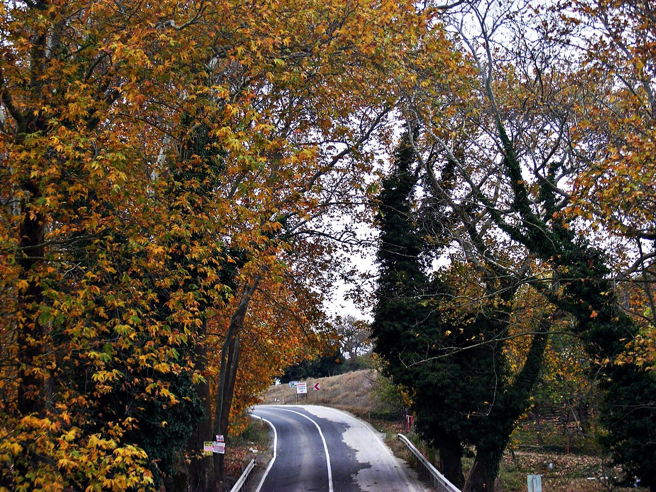 transportation, the way forward, tree, road, diminishing perspective, vanishing point, car, road marking, street, land vehicle, mode of transport, country road, empty road, nature, outdoors, day, growth, no people, autumn, branch