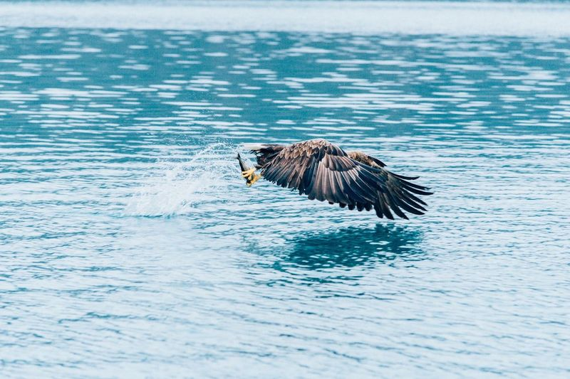 Bullseye. Bird One Animal Spread Wings Animal Themes Flying Nature Animals In The Wild Bird Of Prey Water No People Day Outdoors Beauty In Nature Bald Eagle