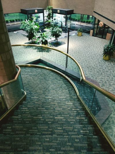 Stairs Carpeted Stairs Golden Railing Interior Design Architecture Richmond, VA High Angle View Spiral Staircase Plant Life Staircase Bannister Hand Rail Stairs Stairway Steps