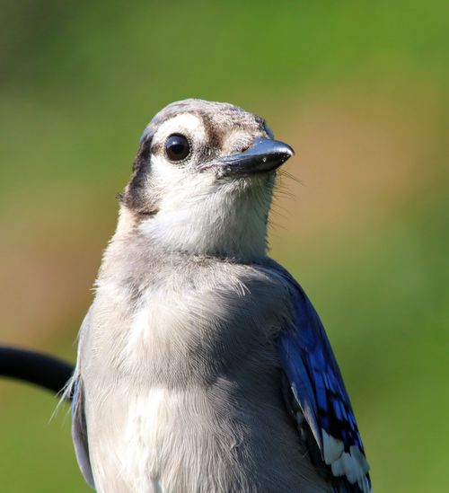 Close-up portrait of a bird