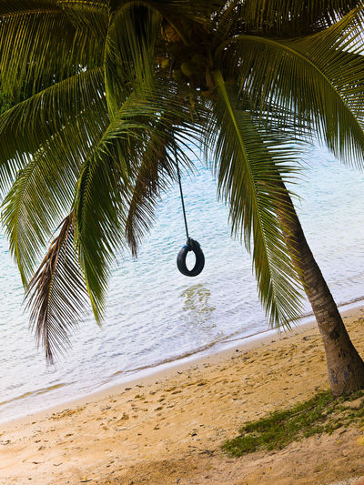 Swing Palm Tree Port Vila Harbour Vanuatu. Port Vila Harbour Vanuatu. Beach Calm Coastline Coconut Palm Tree Day Growth Horizon Over Water Nature Outdoors Palm Frond Palm Leaf Palm Tree Sand Scenics Sea Shore Swing Tranquil Scene Tranquility Tree Tree Trunk Tropical Climate Tropical Tree Water