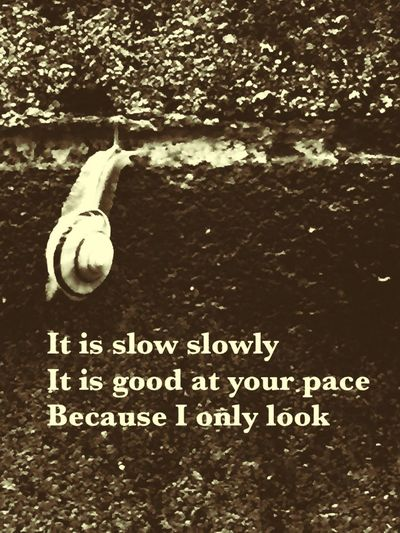 It is slow slowly It is good at your pace Because I only look Taking Photos On The Road Rainy Day カタツムリ
