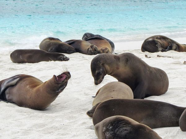 Animals In The Wild Animal Wildlife Animal Themes Mammal Nature Water Sea Lion Day Outdoors Large Group Of Animals Relaxation No People Sea Aquatic Mammal Sea Life