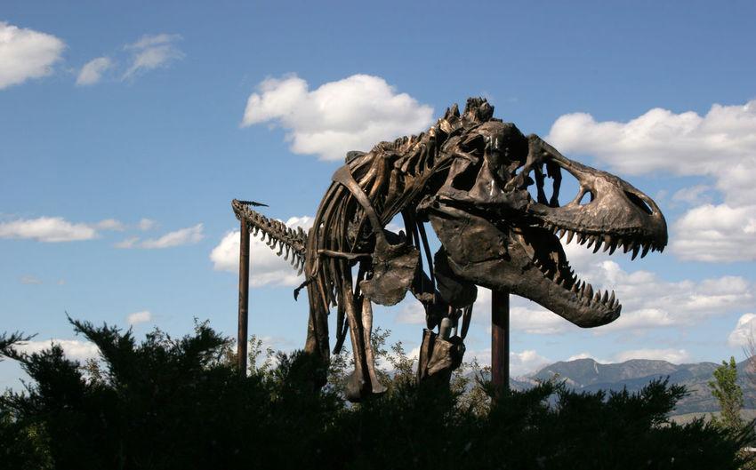 Dinosaur Museum of the Rockies Montana USA Dinosaur Fossil Animal Animal Themes Animal Wildlife Bird Of Prey Cloud - Sky Day Extint Low Angle View Nature No People Outdoors Palaeontology Plant Scary Sky Tree Vertebrate First Eyeem Photo