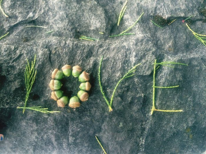 How Do We Build The World? Love Acorns Needles Pine Fir Fall Autumn Word Nature Stone Rock Ledge Things I Like