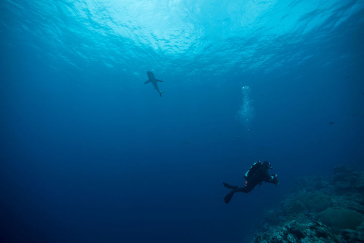 View of ssuba diver swimming in sea