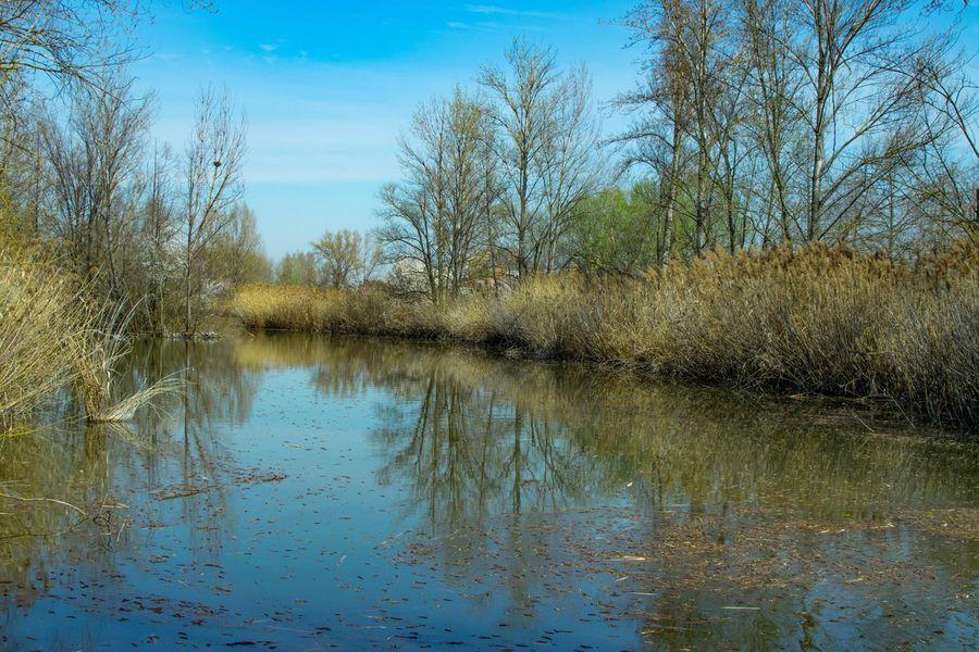 Reflection Nikon Nikonphotography Nature Spring Tranquility
