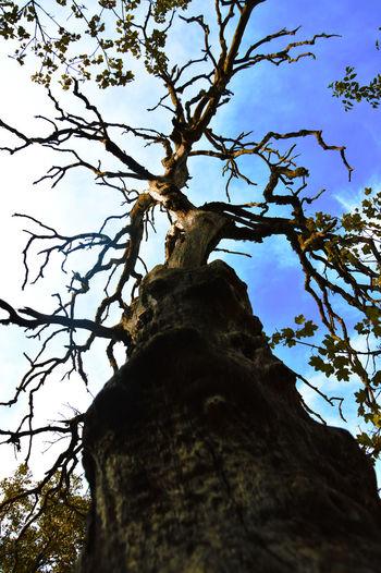Alcoy SPAIN Tree Trunk Tree Sky Nature Tranquility