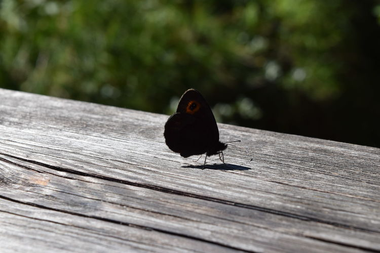 Close-up of bird perching on wooden plank
