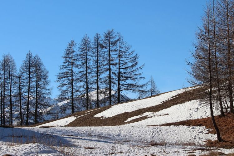Winter 2k19 Lifestyles Low Angle View Landscape Tree Snow Cold Temperature Winter Clear Sky Blue Mountain Forest Pine Tree Sunlight Bare Tree Spruce Tree Deep Snow Snow Covered Pinaceae Dead Plant Pine Woodland Snowcapped Powder Snow Weather Condition White Snowdrift Evergreen Tree Glade Lone Snowcapped Mountain Coniferous Tree Cold Fir Tree