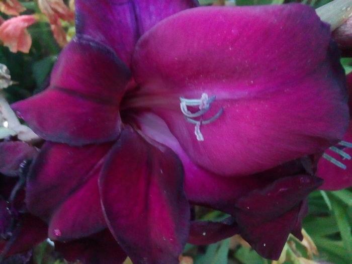 Flower Petal Flower Head Freshness Close-up In Bloom