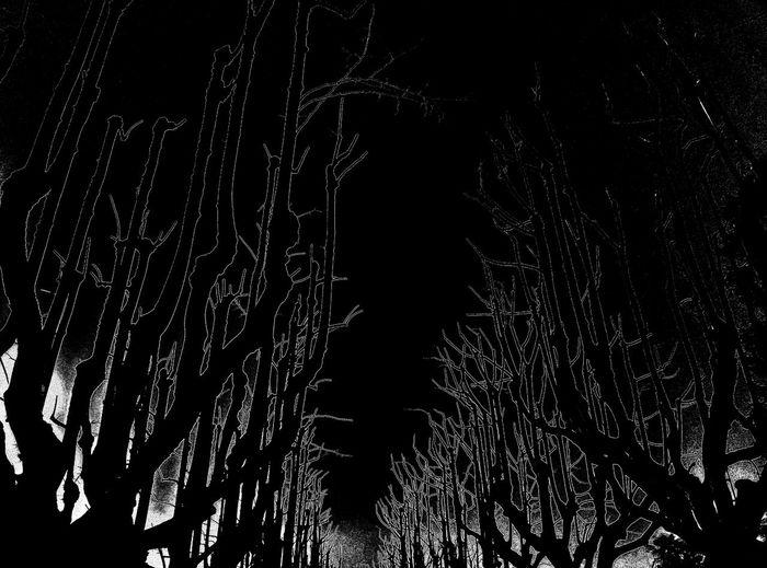 Artificial Nocturne Blackandwhite