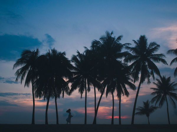 Beach Beauty In Nature Colours Nature Night Outdoors Palm Tree People Plants Portrait Of A Woman Portraits Scenics Shadows Shadows & Lights Shadows And Backlighting Silhouette Sky Skyline Sunset Tree Water Woman Women Women Of EyeEm Women Who Inspire You Neon Life EyeEm Selects