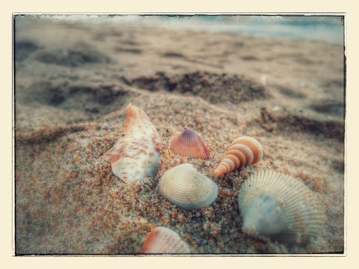 Beach Sea Seashell Outdoors Beauty In Nature Close-up ThousandMiles Soothing To The Soul Blissful☀️