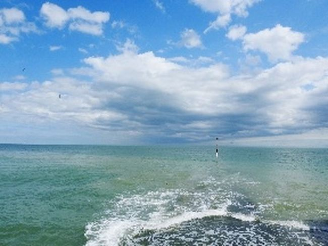 Sea Horizon Over Water Cloud - Sky Sky Outdoors Nature Blue Day Water Scenics No People Horizon Travel Destinations Beauty In Nature Wave Humpback Whale