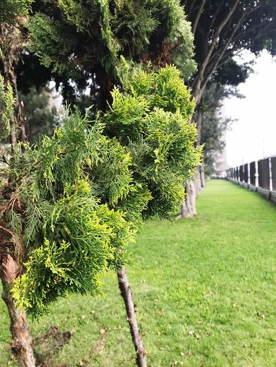 Green Color Growth Tree Day Outdoors Nature Plant Grass No People Beauty In Nature Freshness EyeEmNewHere