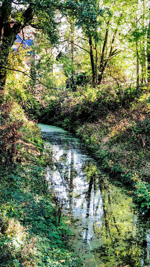 Fall colours in city park in Hamburg, Germany Tree Plant Forest Water Tranquility Land Growth Nature Beauty In Nature Tranquil Scene No People Scenics - Nature Reflection Day Green Color WoodLand Outdoors Flowing Flowing Water Swamp