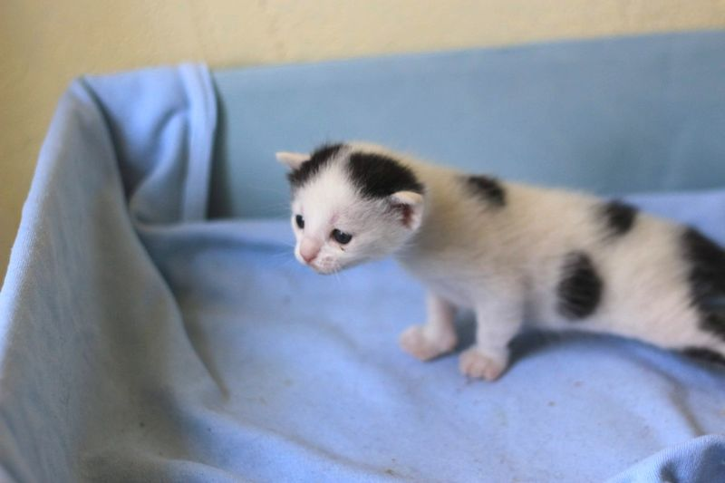 Close-up of white kitten on bed