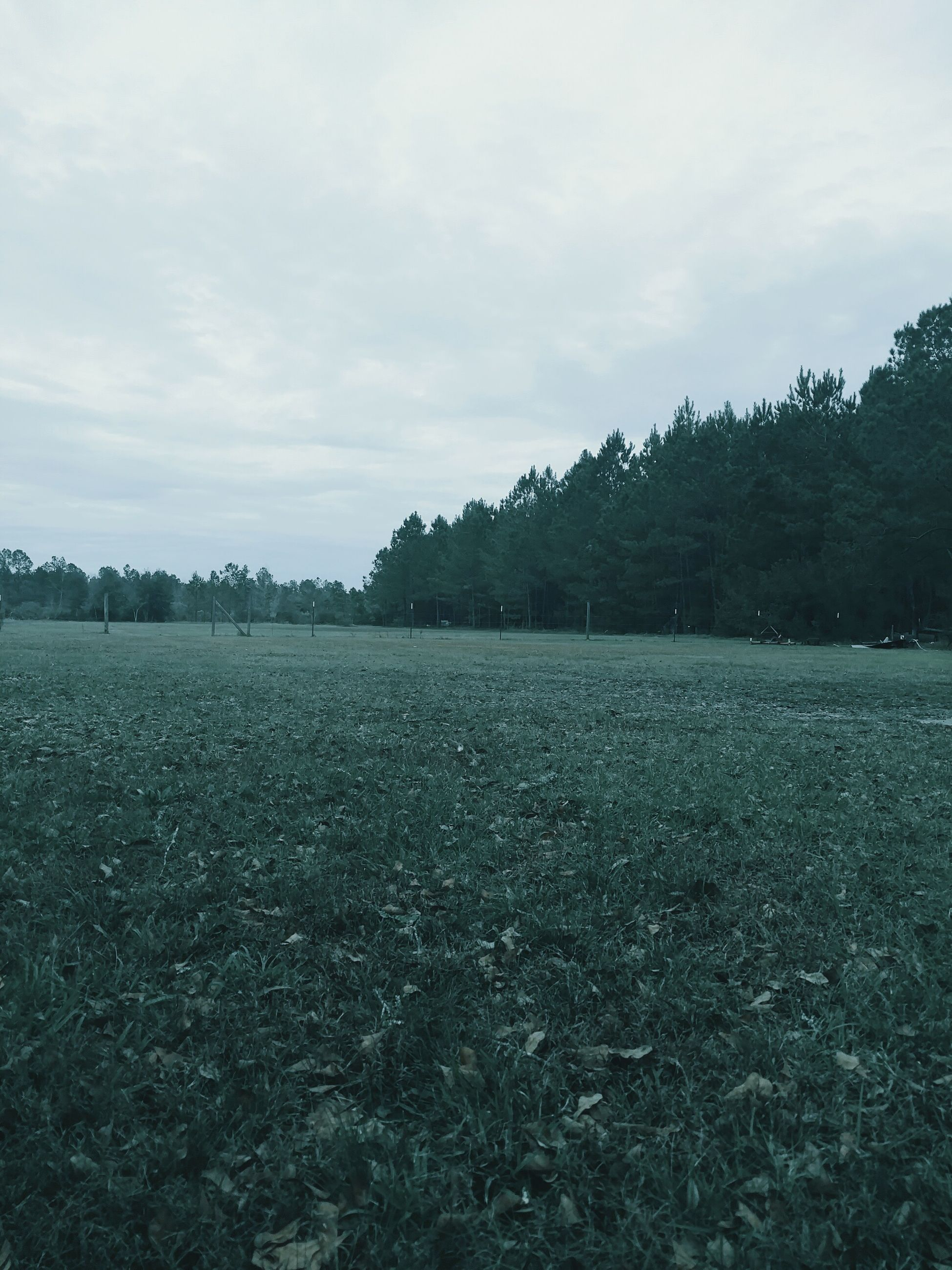sky, tranquil scene, tranquility, tree, scenics, landscape, cloud - sky, beauty in nature, nature, field, cloud, growth, non-urban scene, cloudy, day, idyllic, lake, grass, outdoors, weather