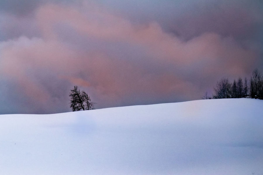 Allgäuer Landschaft Beauty In Nature Cold Temperature Day Landscape Mountain Nature No People Outdoors Scenics Sky Snow Tranquil Scene Tranquility Tree Winter