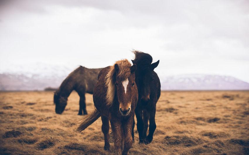 Horses standing on grass against sky