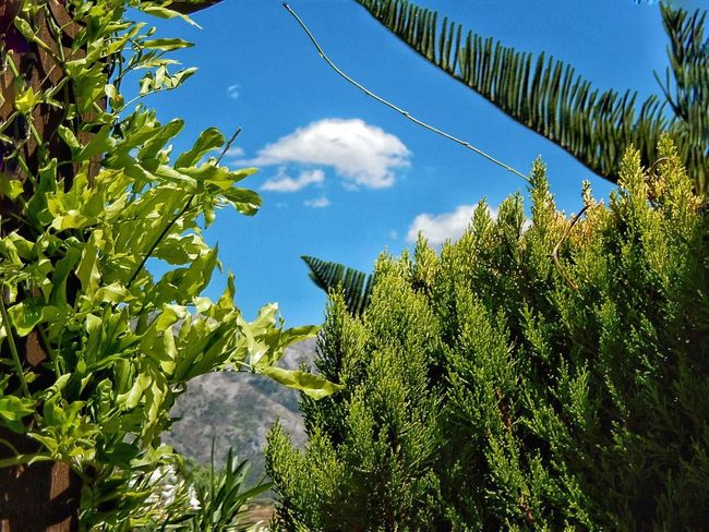 Foliage Comes Alive Andalucía Karen Grace Tree And Sky Spain♥
