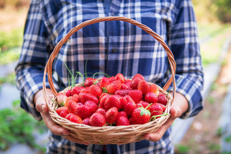 Food Healthy Eating Fruit Farm Basket Freshness One Person Lifestyles Organic Ripe Red Farmer Adult Holding