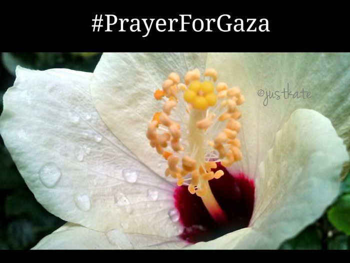 I might not be there but the tragedy that Gaza is facing right now is really heart breaking...i urge everyone to say a little Prayerforgaza may the Lord heal their land SAVE GAZA Flower Nature