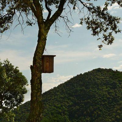 Hermosas vistas tienen estos inquilinos. Subiendo al Castell de Montsoriu ;) Descobreixcatalunya Sun Instagramers Fotosdesomni naturaleza picoftheday photooftheday greatshoot igersbcn instagood instadaily