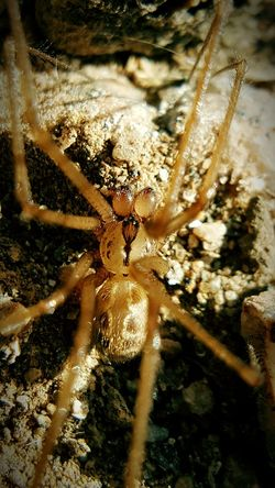 Nature Close-up One Animal No People Animal Themes Outdoors Day Water Animals In The Wild Spider Web Spider Beauty In Nature Cellar Spider Macro Eyes Spider Insect Nature Insects