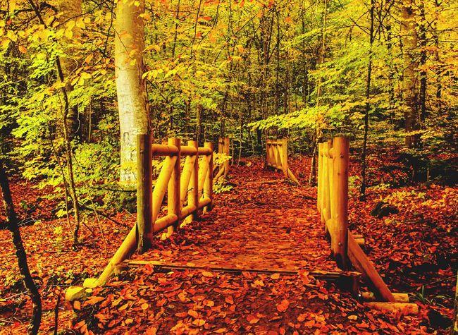 Fall Beauty Fall Autumn Autumn Colors Colors Of Autumn Leaf Jungle Nature