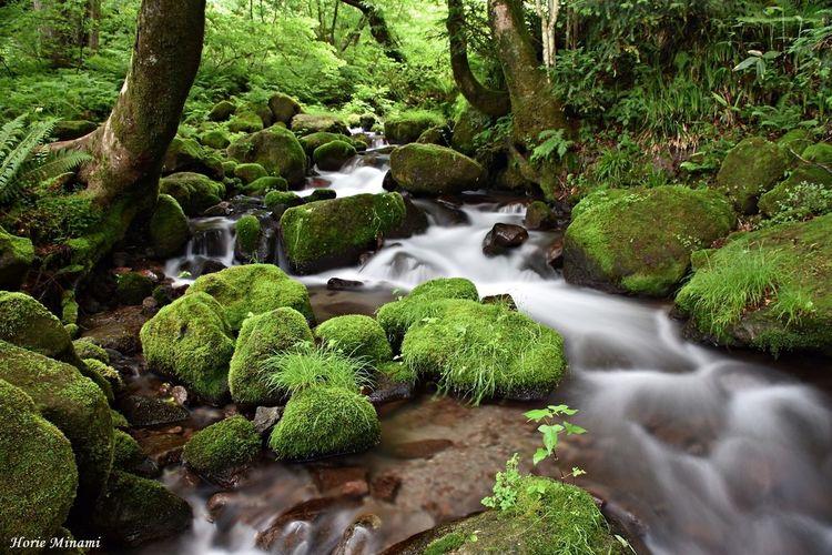 木谷沢渓流 EyeEm Best Shots EyeEm Selects EyeEm Gallery EyeEmNewHere Water Plant Beauty In Nature Green Color Nature Tree Growth Long Exposure No People