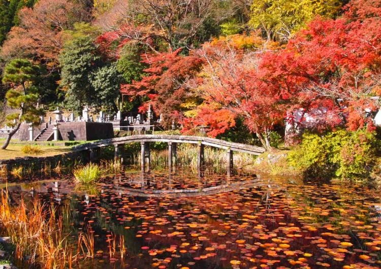 Architecture Autumn Beauty In Nature Bridge Forest Japan Oita Taketa Leaf Maple Leaf Maple Tree Nature No People Outdoors Park - Man Made Space Reflection Scenics Tranquil Scene Tree Water