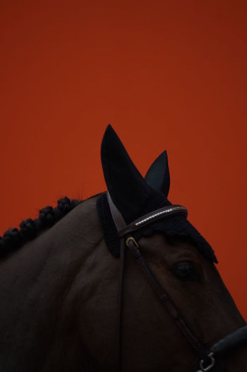 Close-up of horse against sky