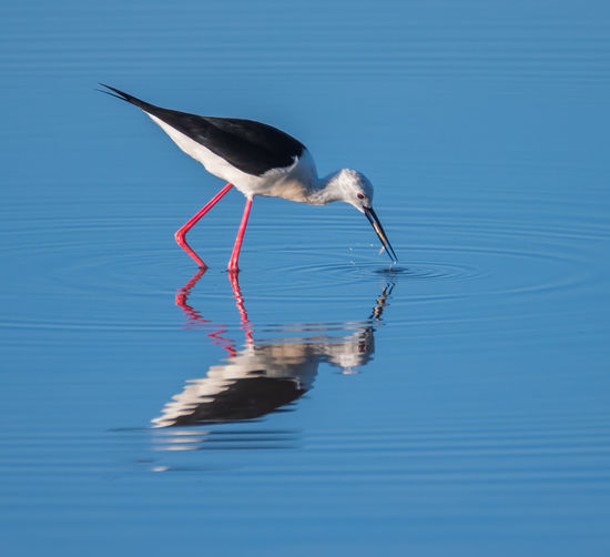 Close-Up Of Bird In Water