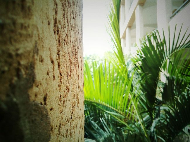 a close up shot suppoted by wall 👌 Tree Close-up Grass Green Color Plant Growing Young Plant EyeEmNewHere The Architect - 2018 EyeEm Awards The Great Outdoors - 2018 EyeEm Awards Concrete Plant Life Concrete Wall Cement Weathered Bamboo - Plant Bamboo Grove Creative Space Autumn Mood