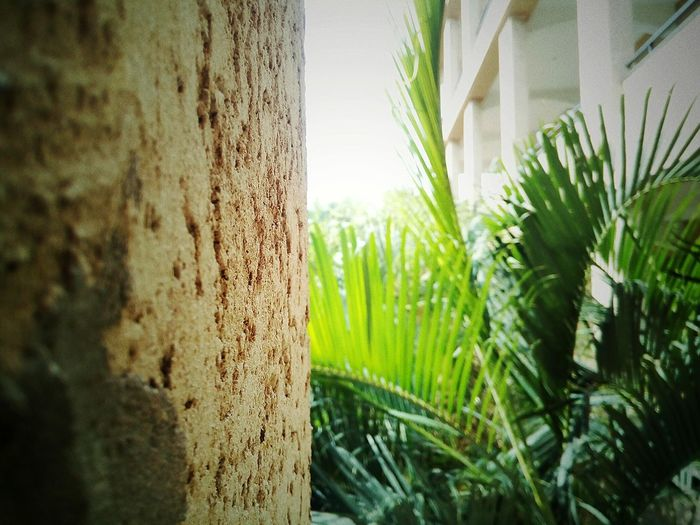 a close up suppoted by wall 👌 Tree Close-up Grass Green Color Plant Growing Young Plant EyeEmNewHere The Architect - 2018 EyeEm Awards The Great Outdoors - 2018 EyeEm Awards Concrete Plant Life Concrete Wall Cement Weathered Bamboo - Plant Bamboo Grove Creative Space