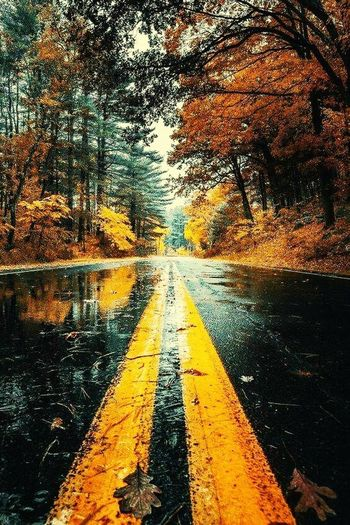 Road The Way Forward Tree Yellow No People Asphalt Day Outdoors Nature Sky Close-up